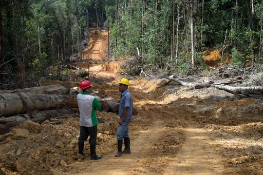 Corruption in the Forestry Sector