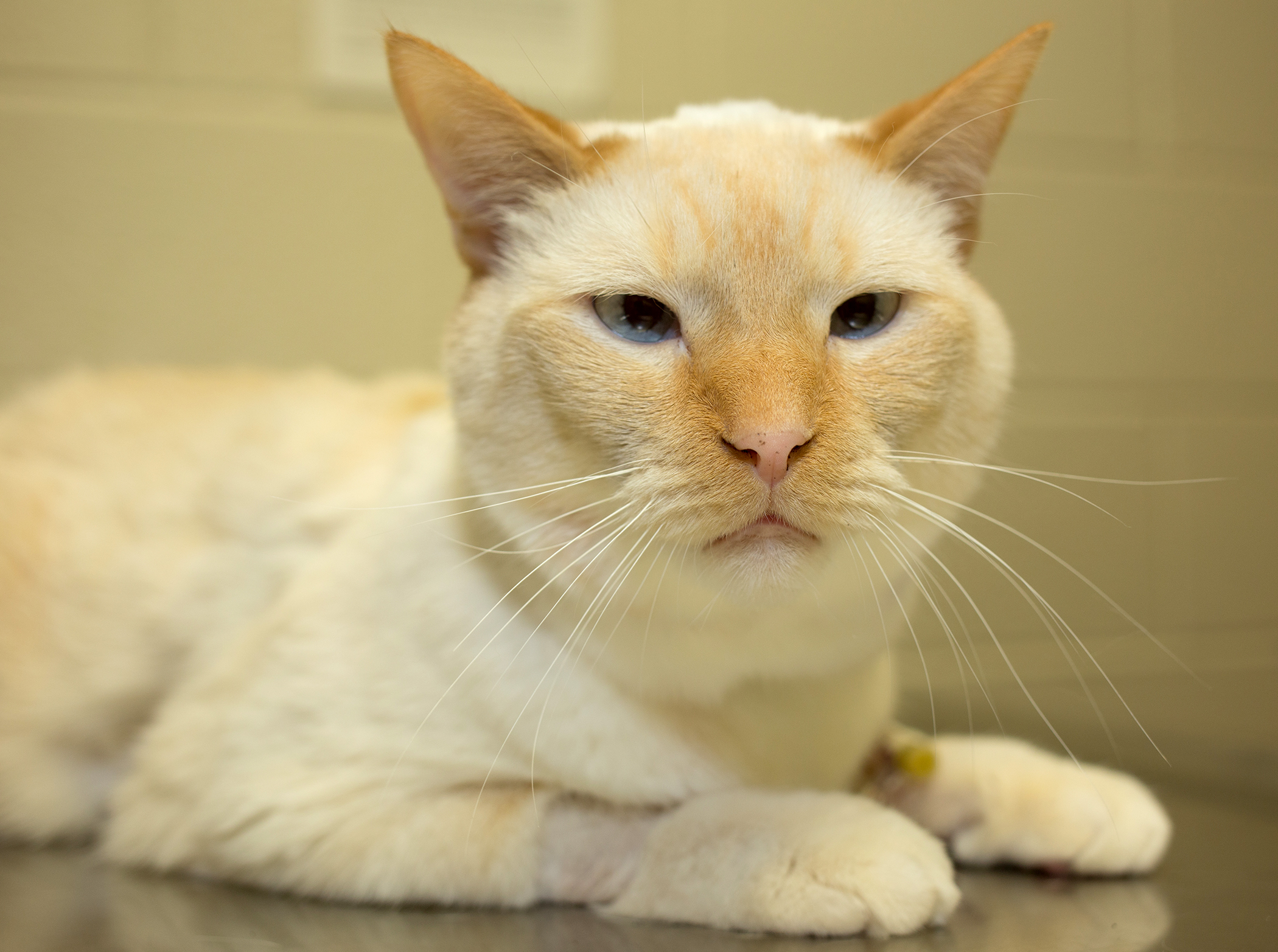 Veterinary surgeons use feline adult stem cells in kidney ...