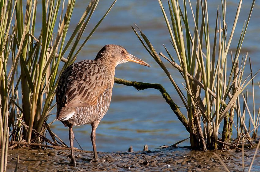 endangered species family eradicating invasive species threatens endangered species recovery