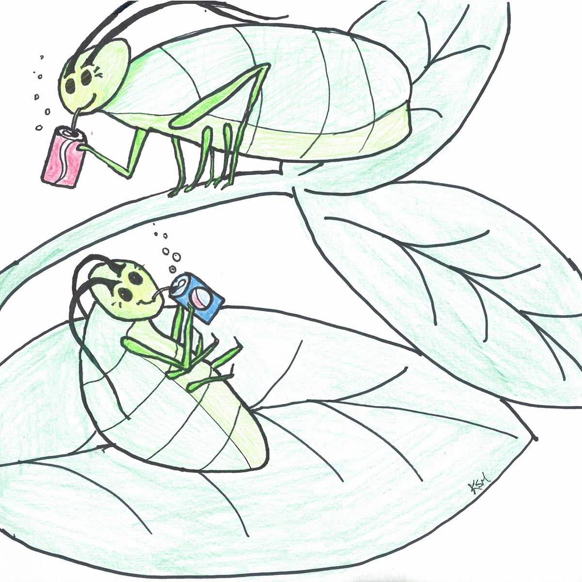 aphids balance their diets by rebuilding plant amino acids Dietary Law aphids enjoying their junk food diets credit kelli monce