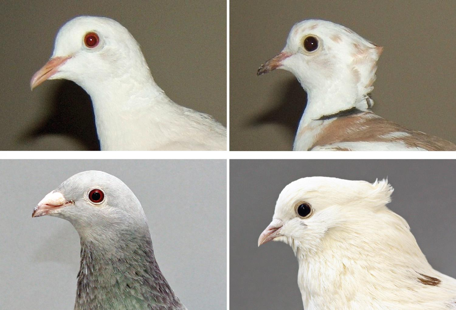 How to Know if Doves Are Right for You pics