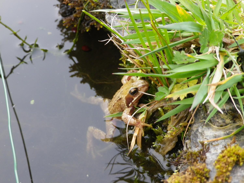 face virus risk in garden ponds