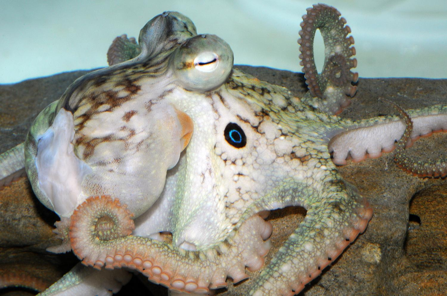 First cephalopod genome contains unique genes involved in nervous ...
