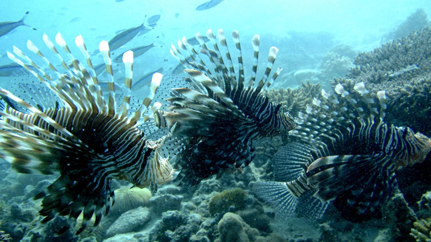 Saving coral reefs depends more on protecting fish than ...