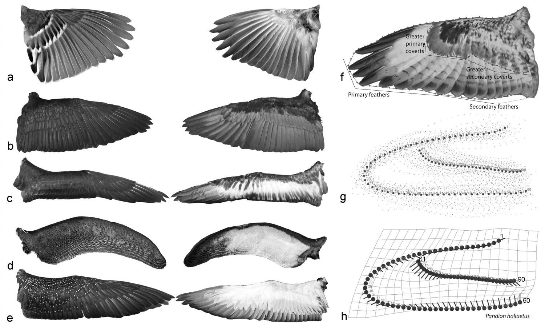 Avian Physiology