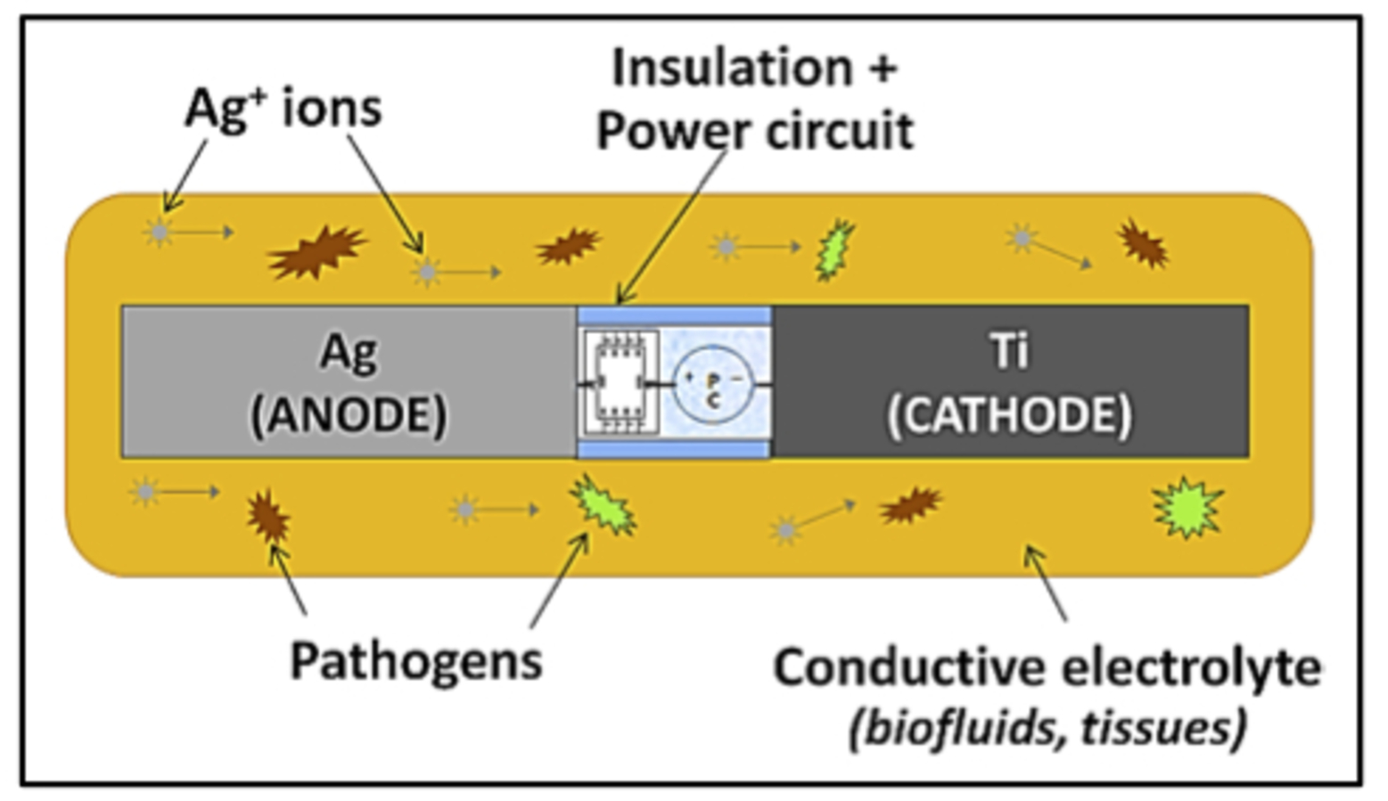 Silver Shines As Antibacterial For Medical Implants Circuit Diagram Nc Schematic Of Ions Dispersing From The Implant And Fighting Pathogens Credit Rohan Shirwaiker Cc By Nd