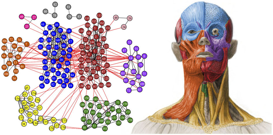 Researchers Describe The Modular Anatomical Structure Of The Human Head