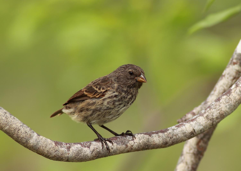 Bird Species  Letters