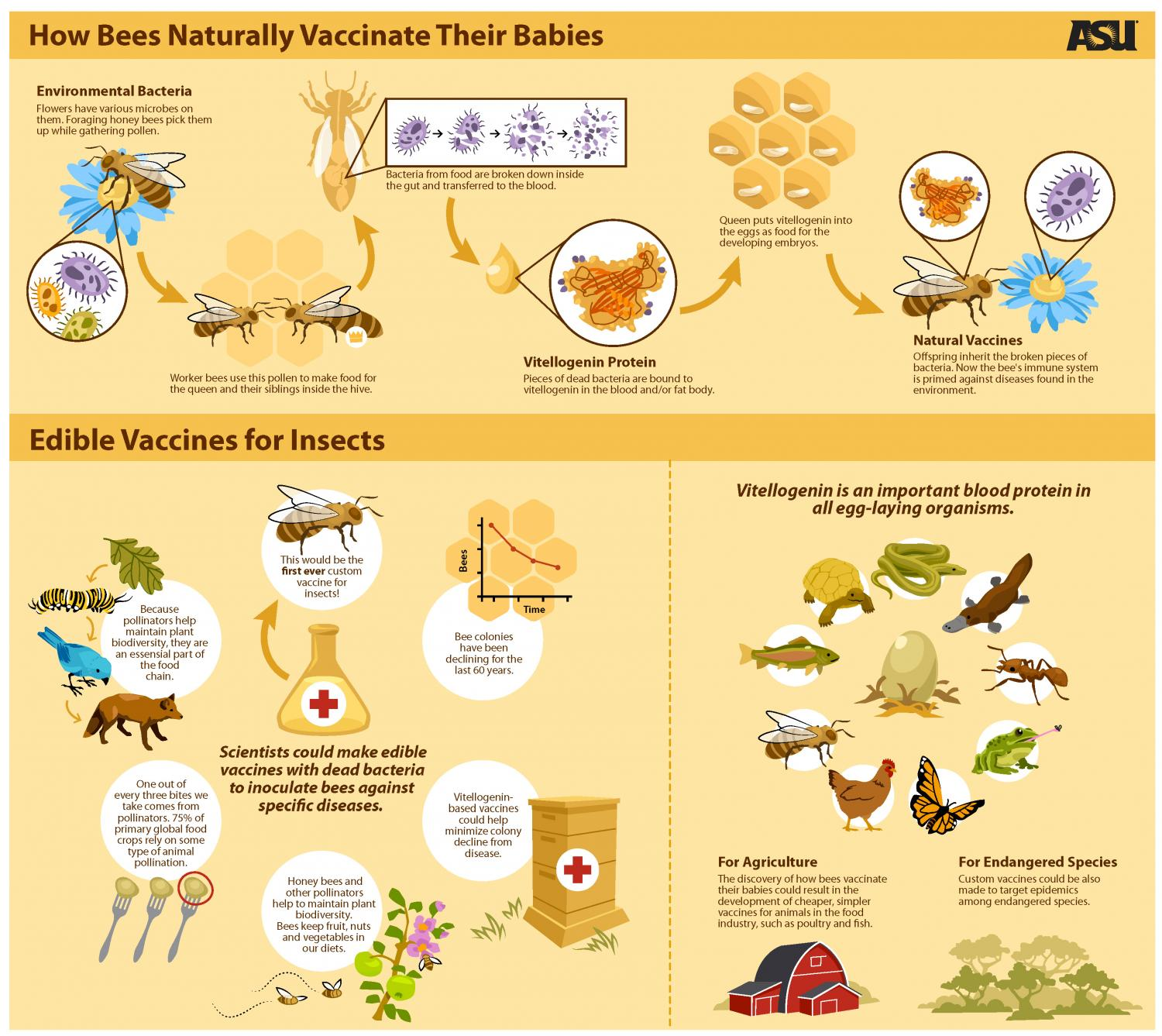 bees naturally vaccinate their babies
