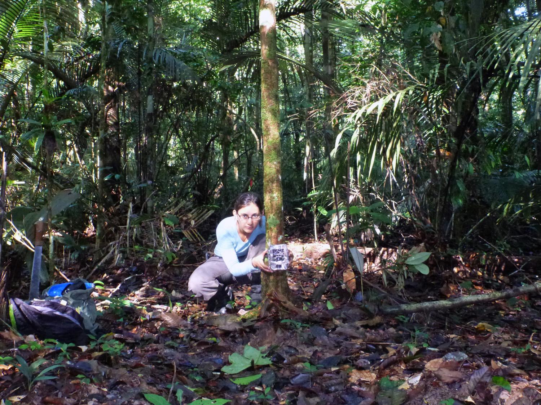 biodiversity rainforest - photo #16