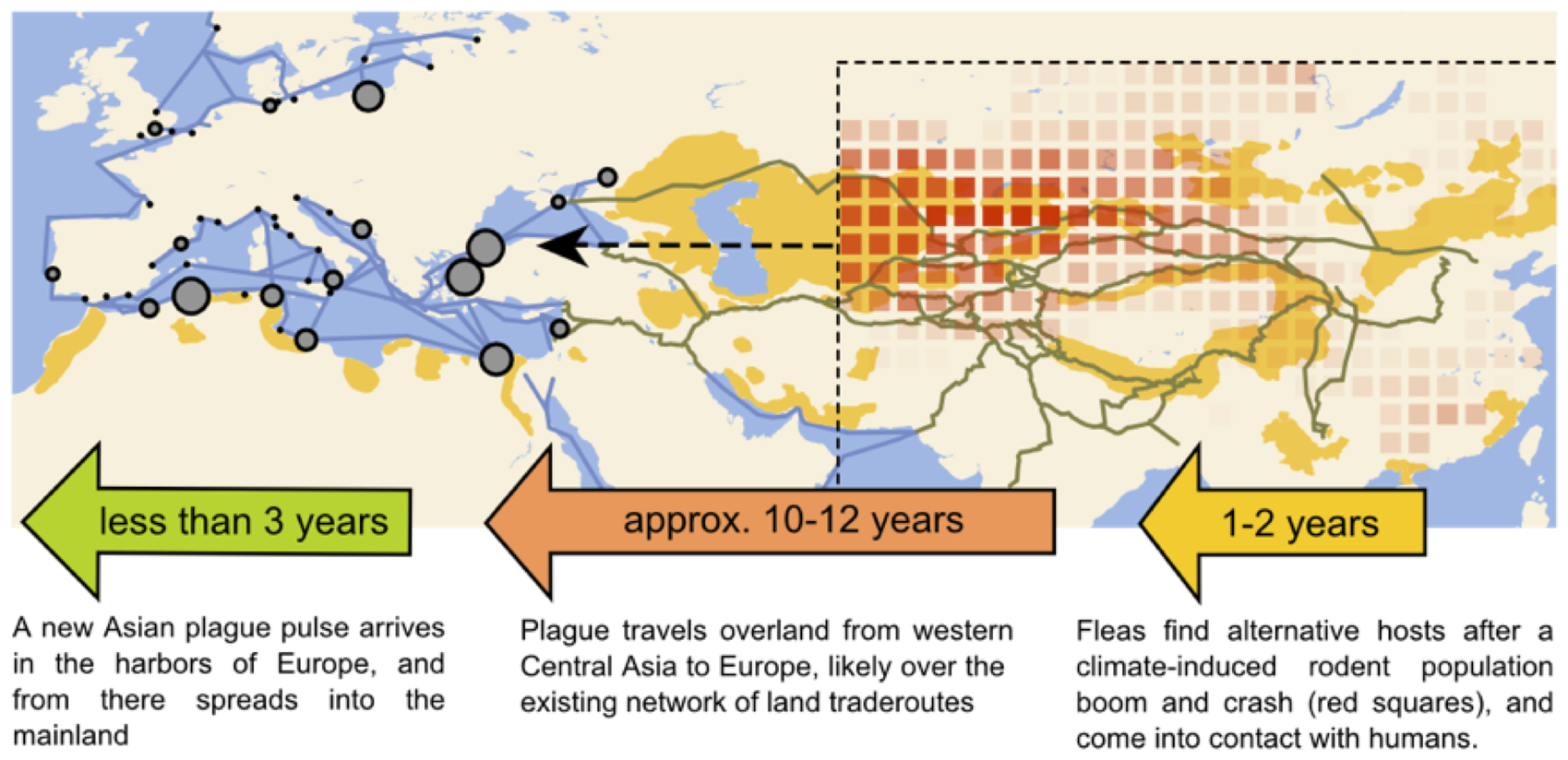 Plague outbreaks that ravaged europe for centuries were driven by how asian climate fluctuations led to plague outbreaks in europe credit schmid et al pnas cc by nc sa gumiabroncs Gallery