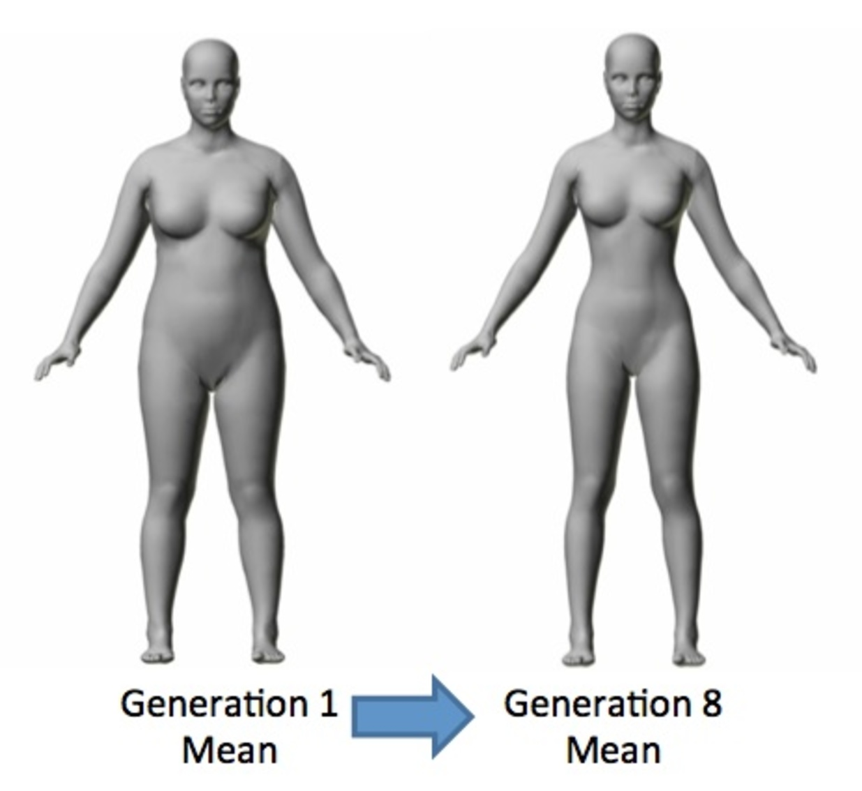 Most attractive body type female