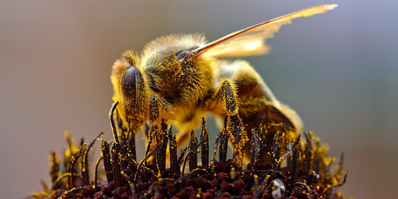 Research shows loss of pollinators increases risk of malnutrition and disease