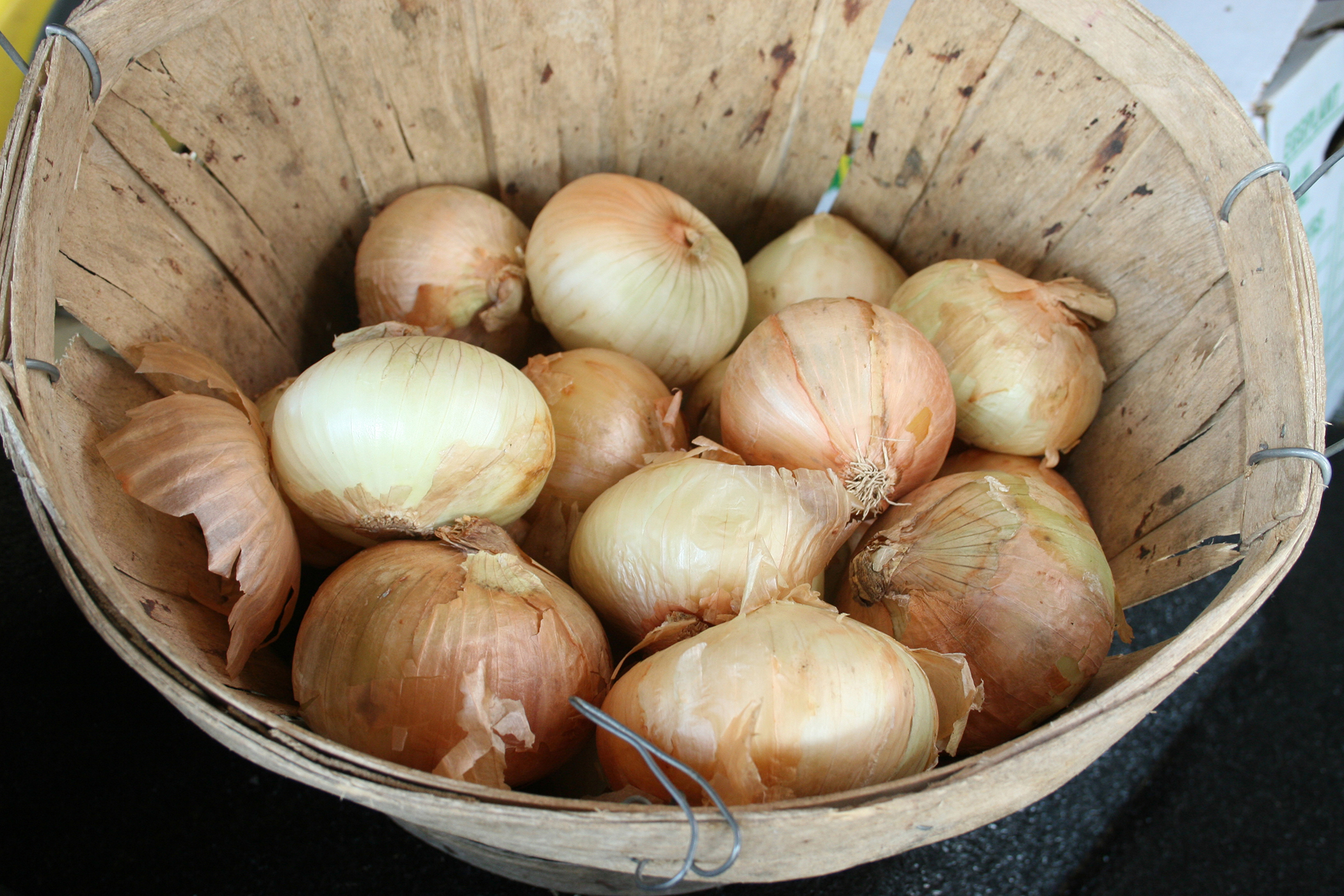 Diseases of onions. Fight against diseases and pests of onions 99