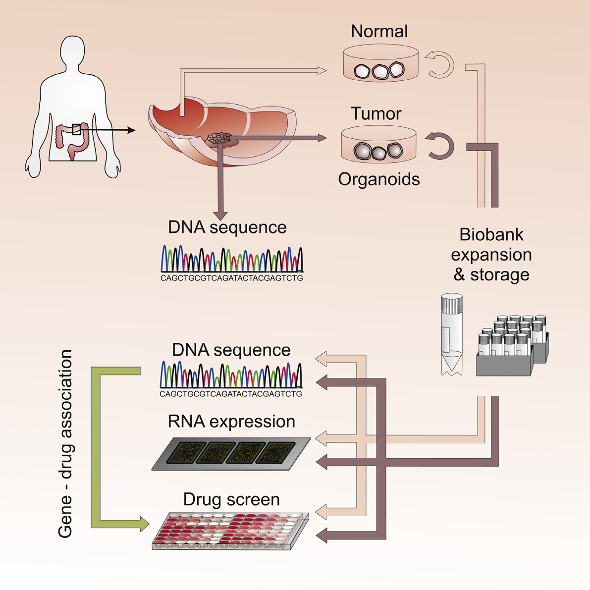 Patient Cancer Cells Help To Test Treatments