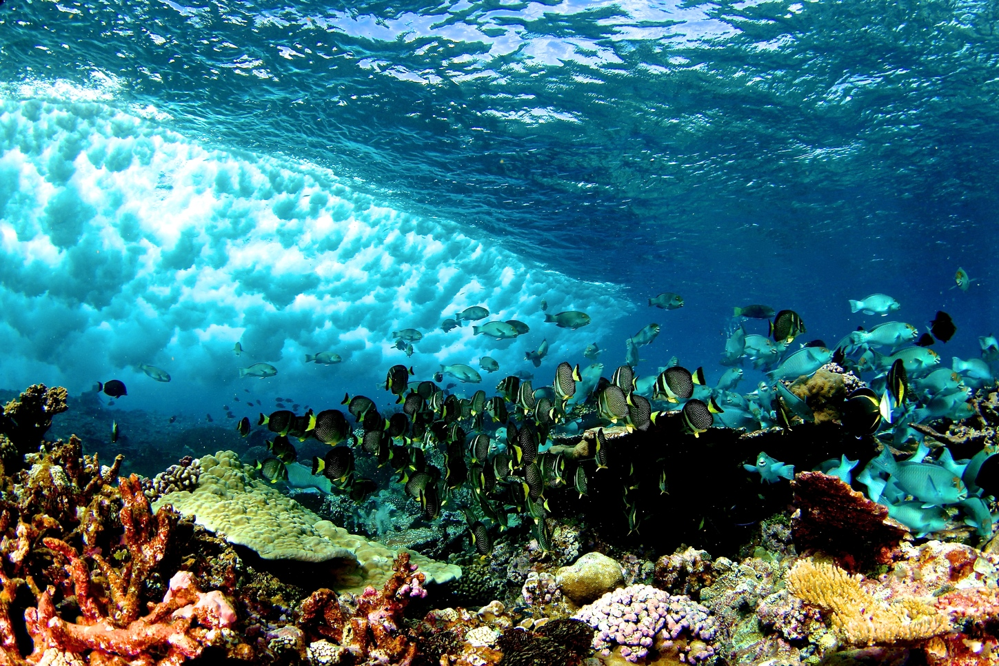 Coral reefs' physical conditions set biological rules of ...