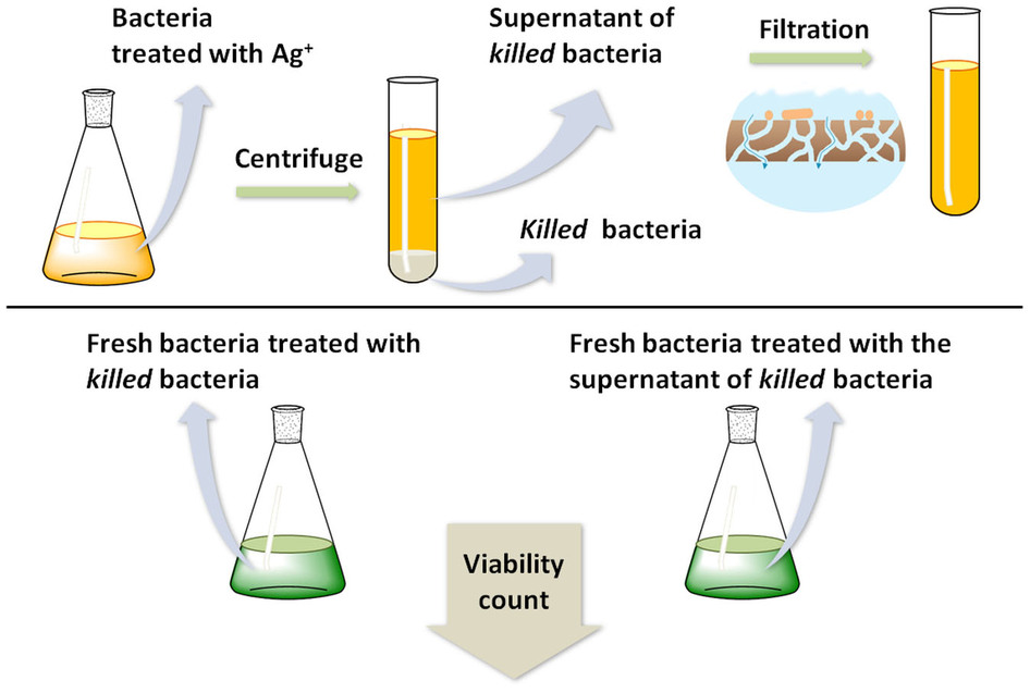 an overview of the experiment killing a bacteria with antibodies 2012-7-12  modeling and simulation of the innate immune system  bacteria and viruses  function of killing infected cells and regulating the production of.