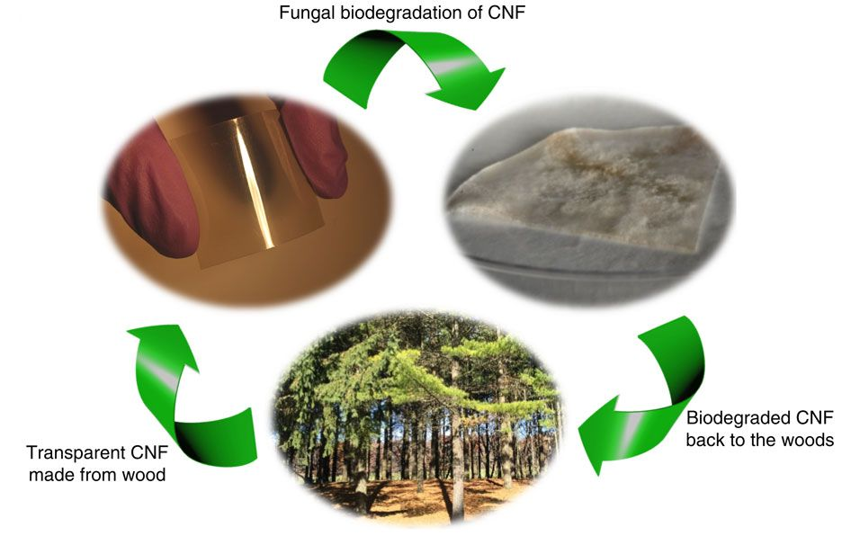 biodegradation research papers A review on bioremediation of heavy metals in attenuation area has both basic research and field application biodegradation is the breaking down of.