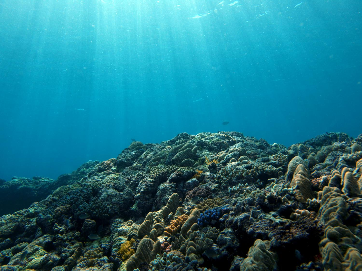 coral reef decrease Artificial reefs reduce the damage of divers on natural coral reefs, according to a new ben-gurion university of the negev study just published in the journal of.