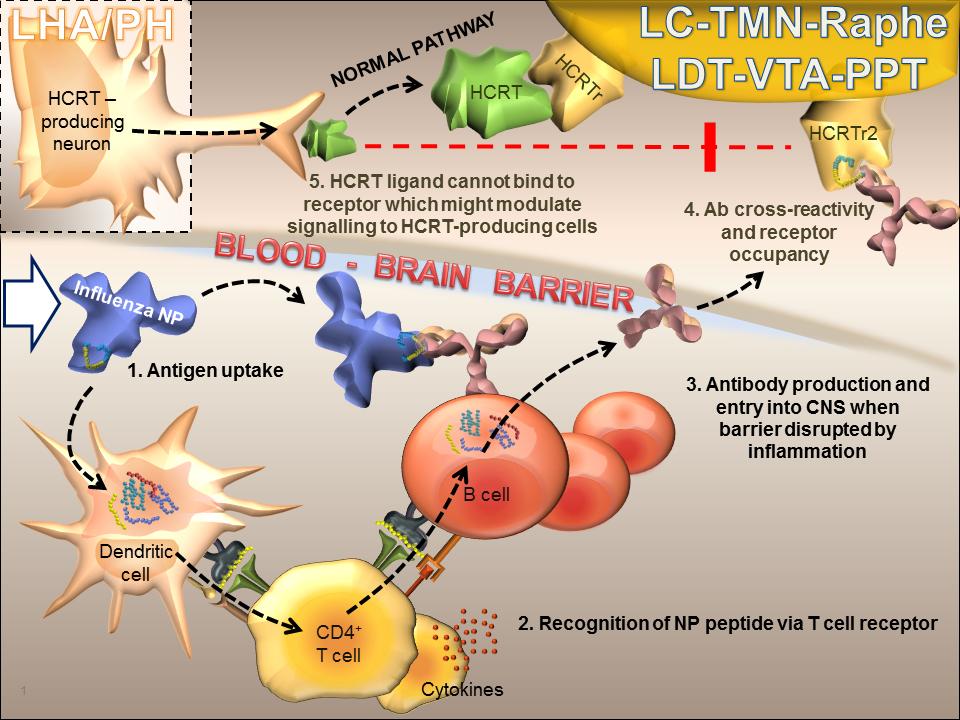 narcolepsy swine flu vaccine ile ilgili görsel sonucu