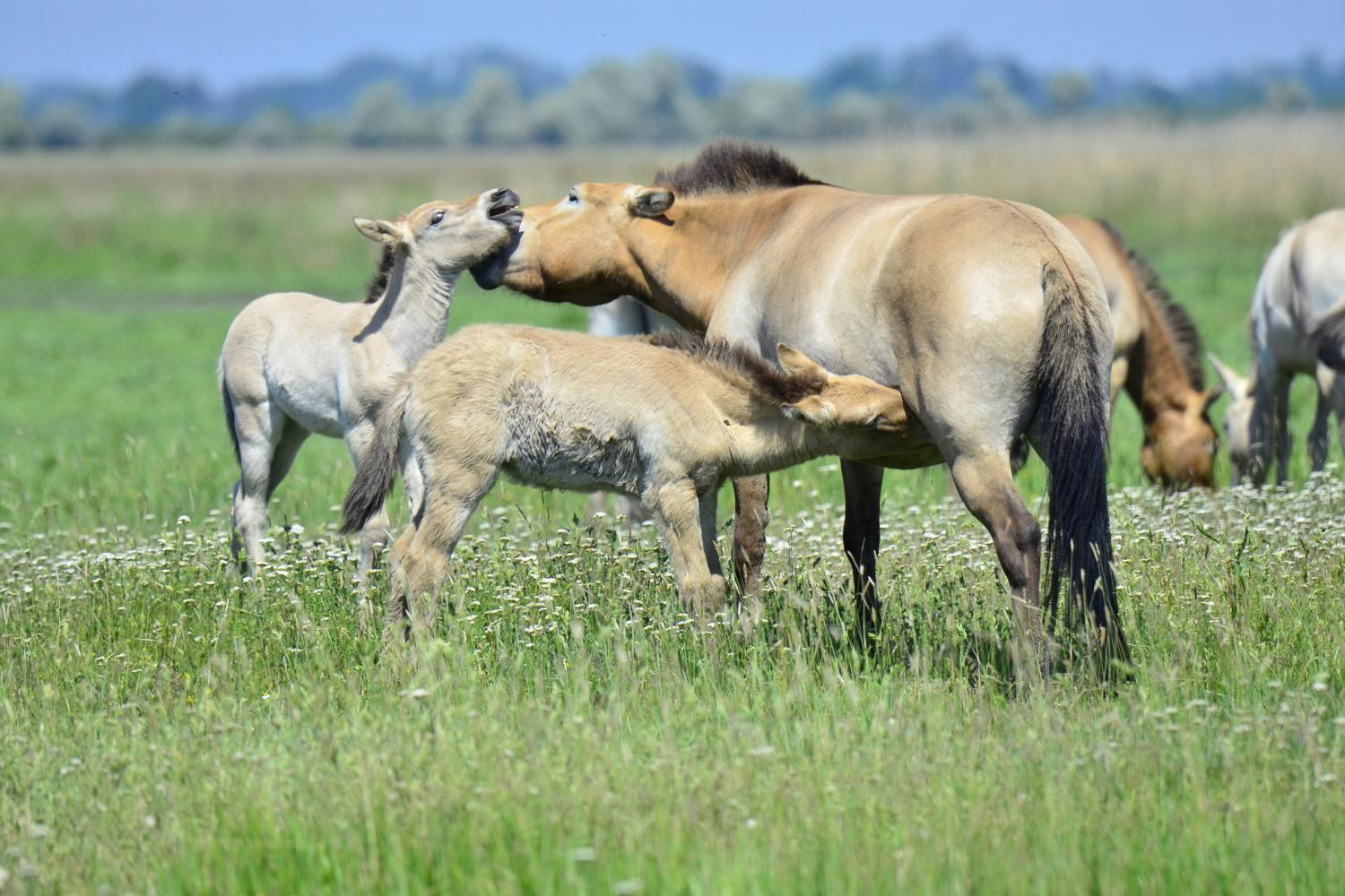 A horse of a different color: Genetics of camouflage and ...