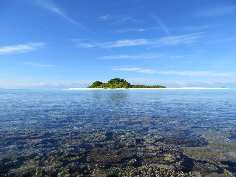 The Coral Island - Wikipedia