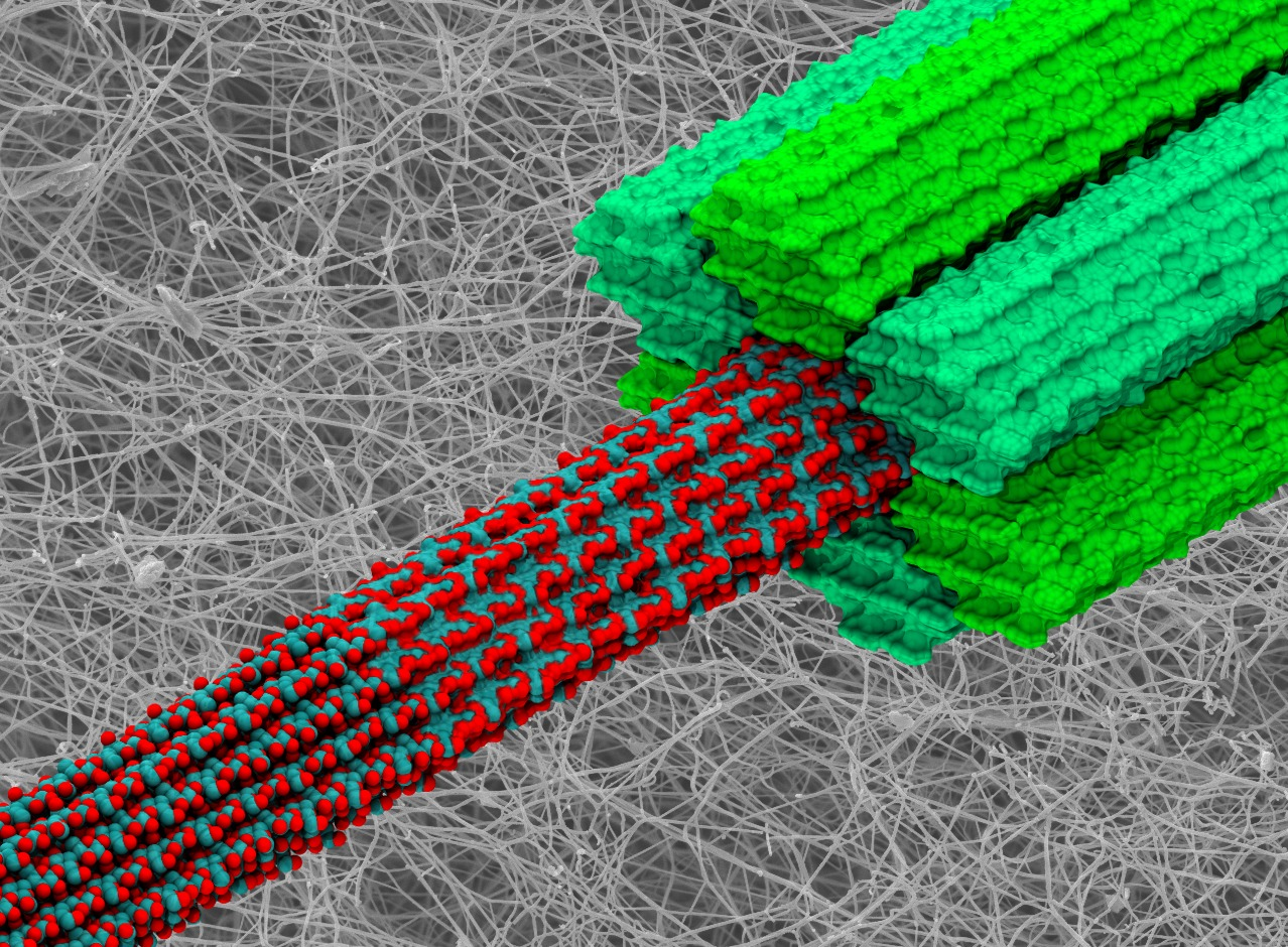 Supercomputer Unlocks The Secrets Of Plant Cells To Create More Cell A Computer Generated Image Three Forms Cellulose Scaffolding Walls Credit Ibm