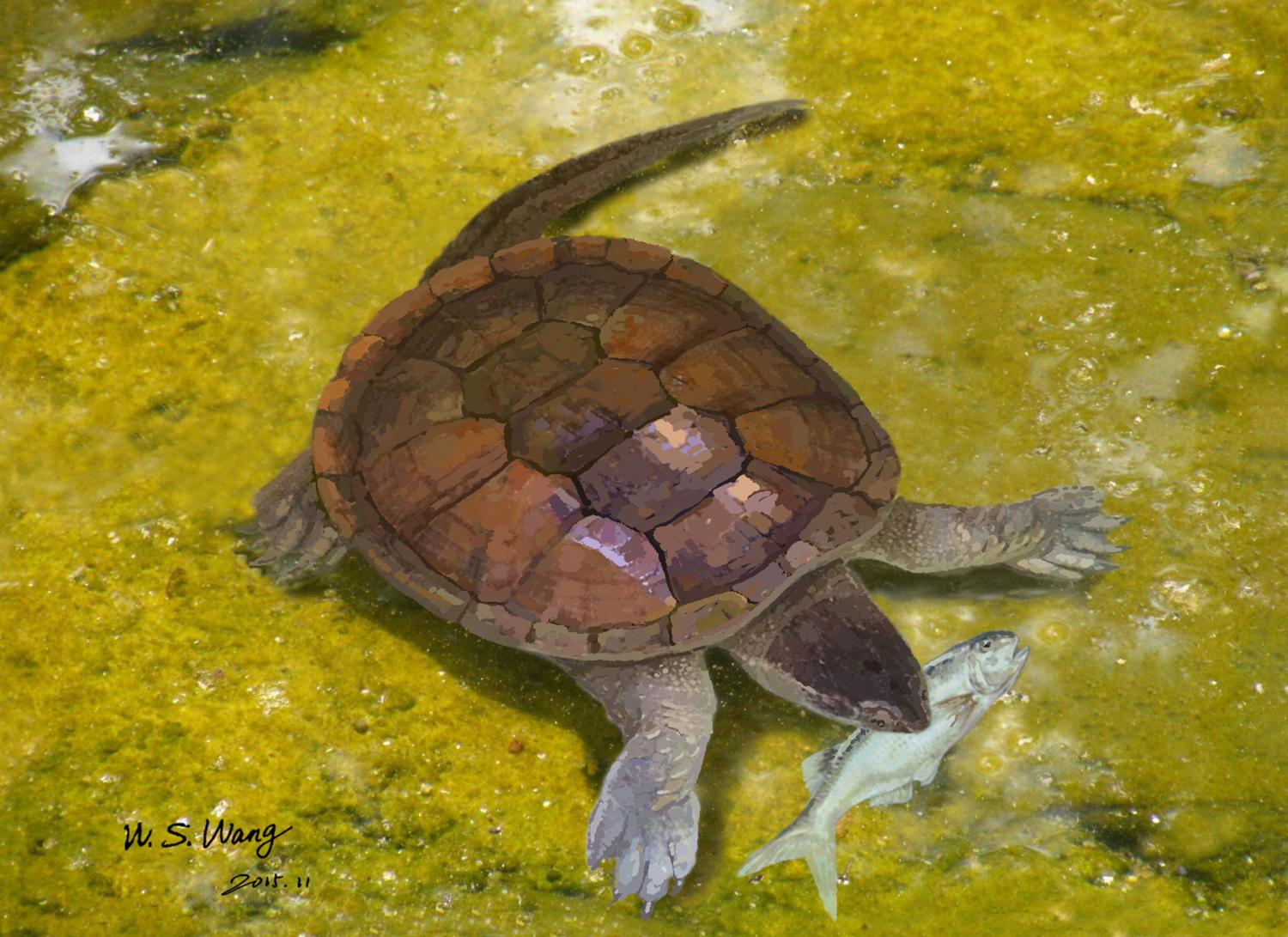 New Insights Into The Family Tree Of Modern Turtles
