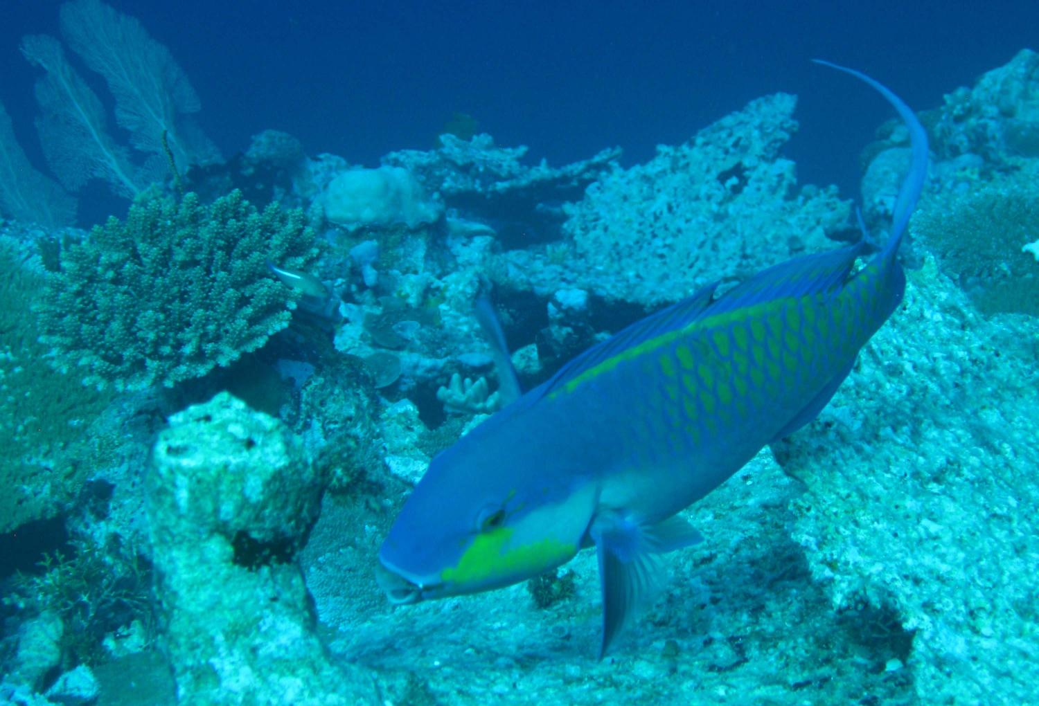Coral Reef Questions and Study Guide   Quizlet Flashcards ...