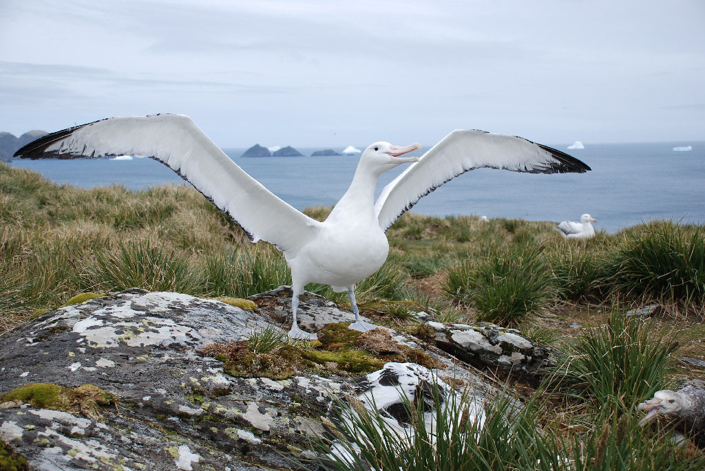 Age Doesn T Matter For Foraging Albatrosses