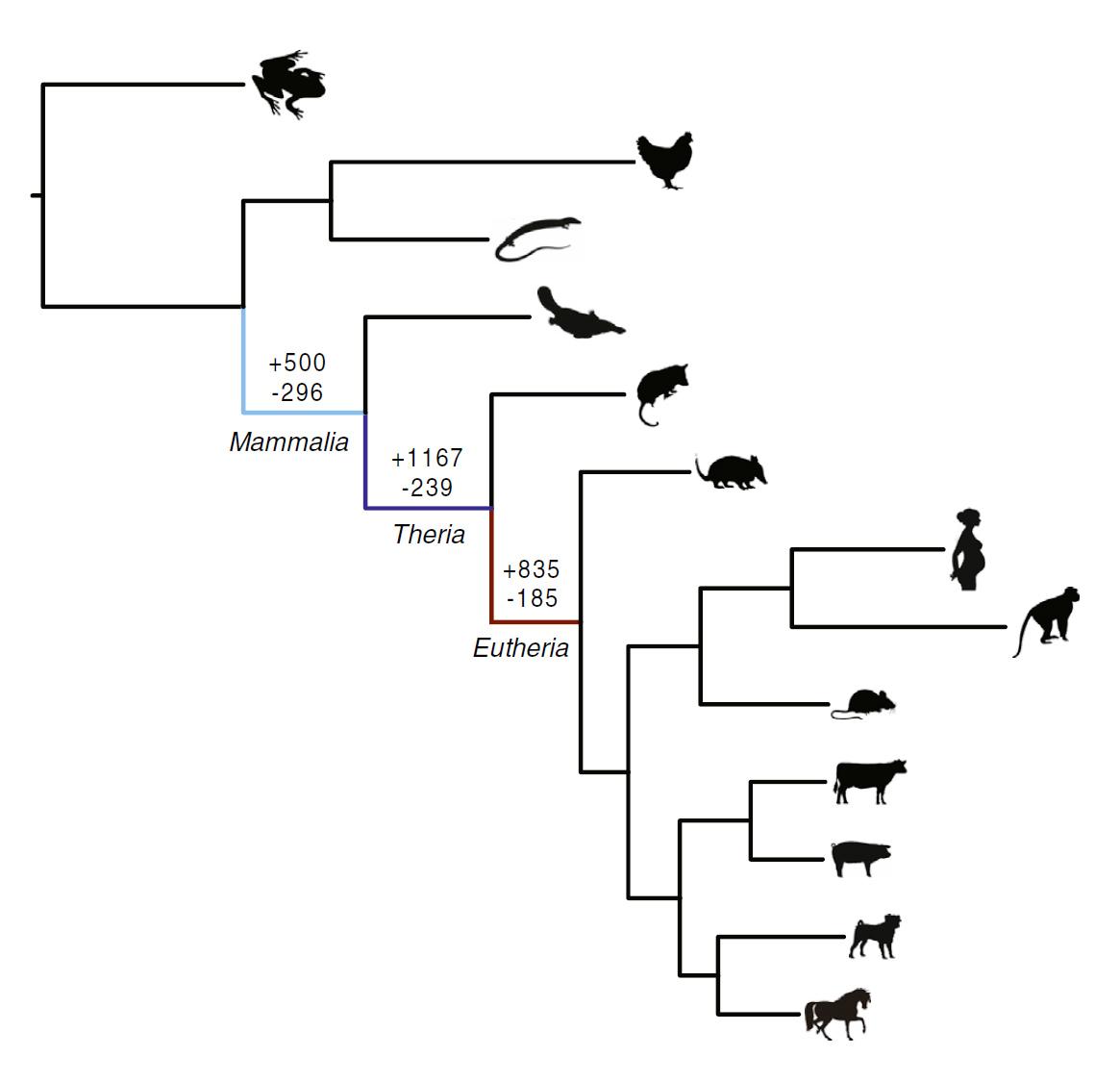 ancient  u0026 39 genomic parasites u0026 39  spurred evolution of pregnancy