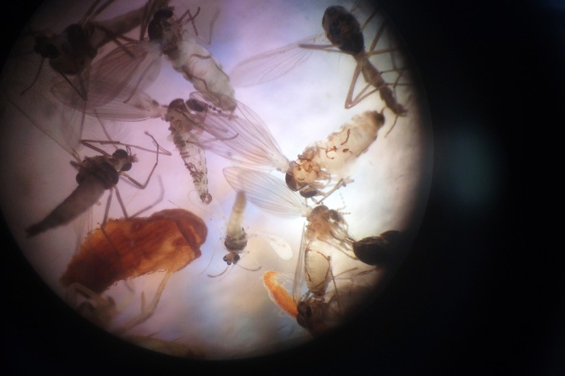 A New Kind Of Light Bulb Traps Insects That Carry Vector