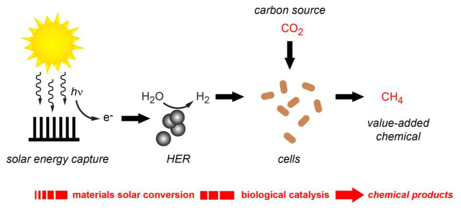 Another milestone in hybrid artificial photosynthesis ccuart Gallery
