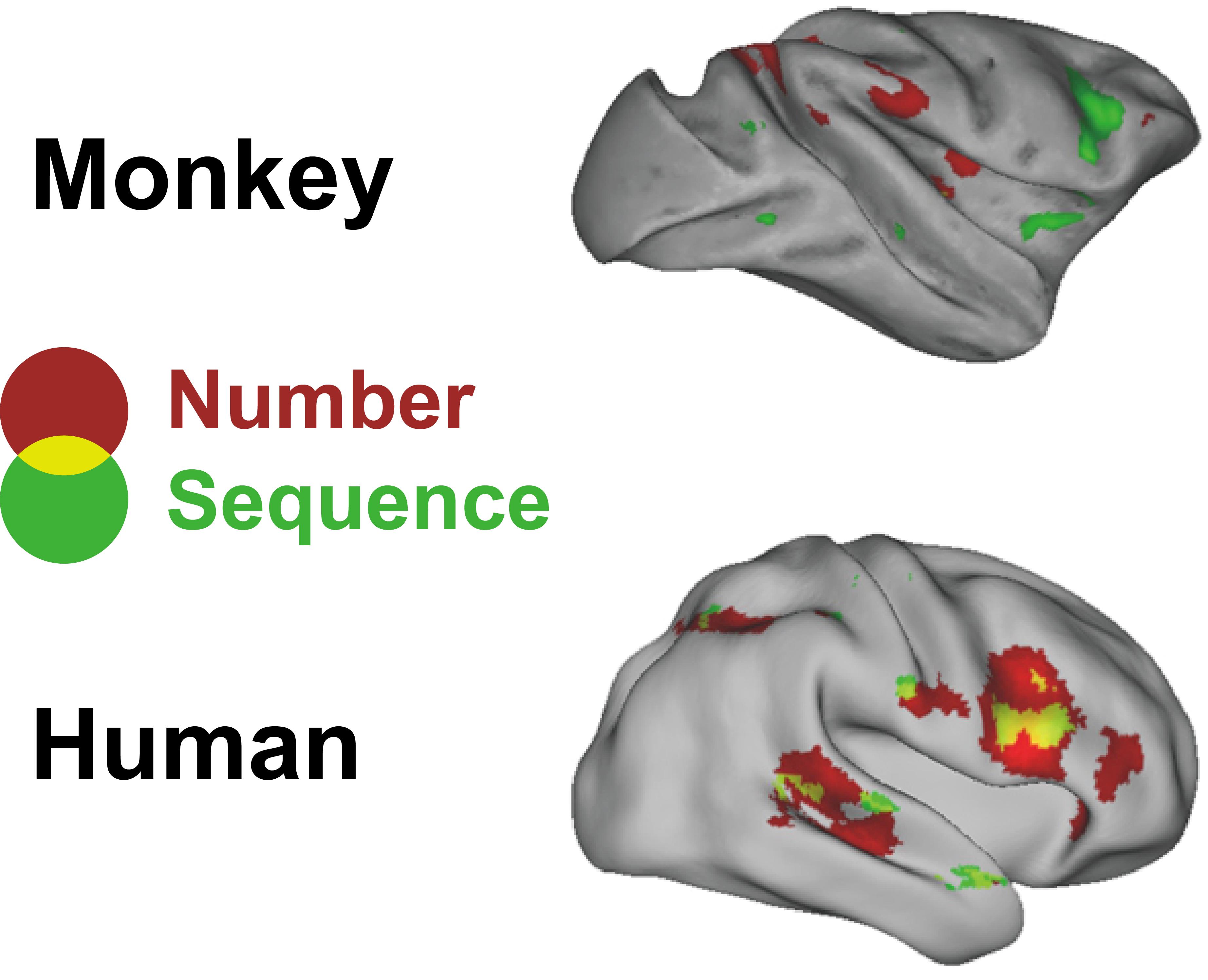 Breakthrough In Understanding The Origins Of Language