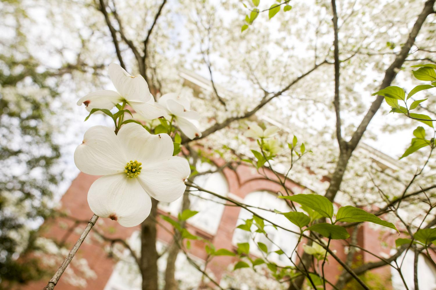 Every Dogwood Has Its Day Dogwood Genome Project Calls On Citizen