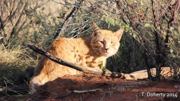 Field tests needed to help control feral cats on squirrel home, chipmunk home, fast cat home, ferret home, mountain lion home, lizard home, duck home, pet cat home, dog cat home, stray cat home, cat lady home, pig cat home,