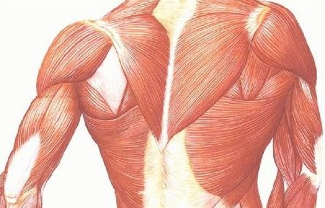 For Muscular Dystrophy Patients Harnessing Gene Helps Repair Muscle