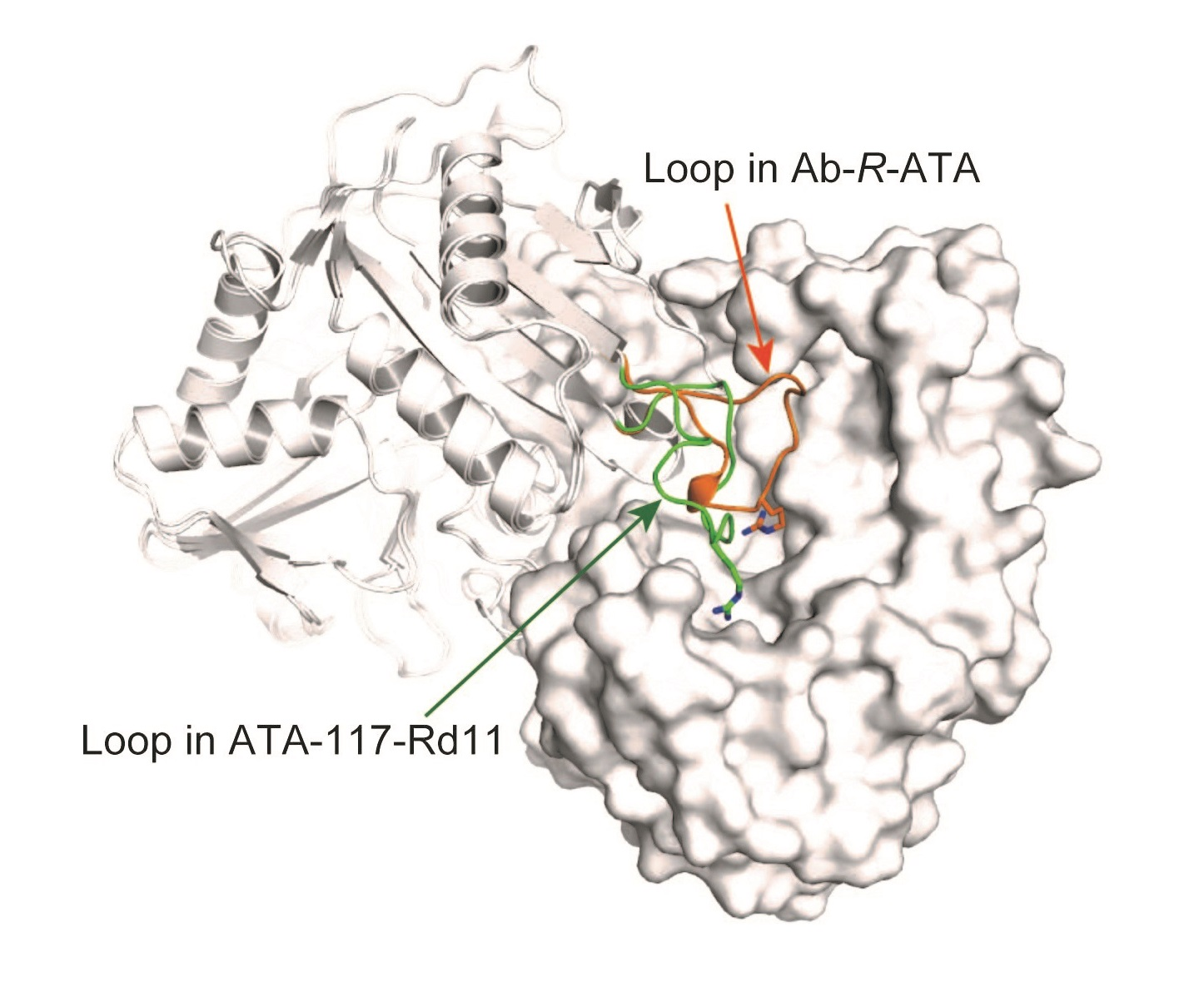 An important enzyme used in drug production recognizes its substrate how an important enzyme used in drug production recognizes its substrate pooptronica Images