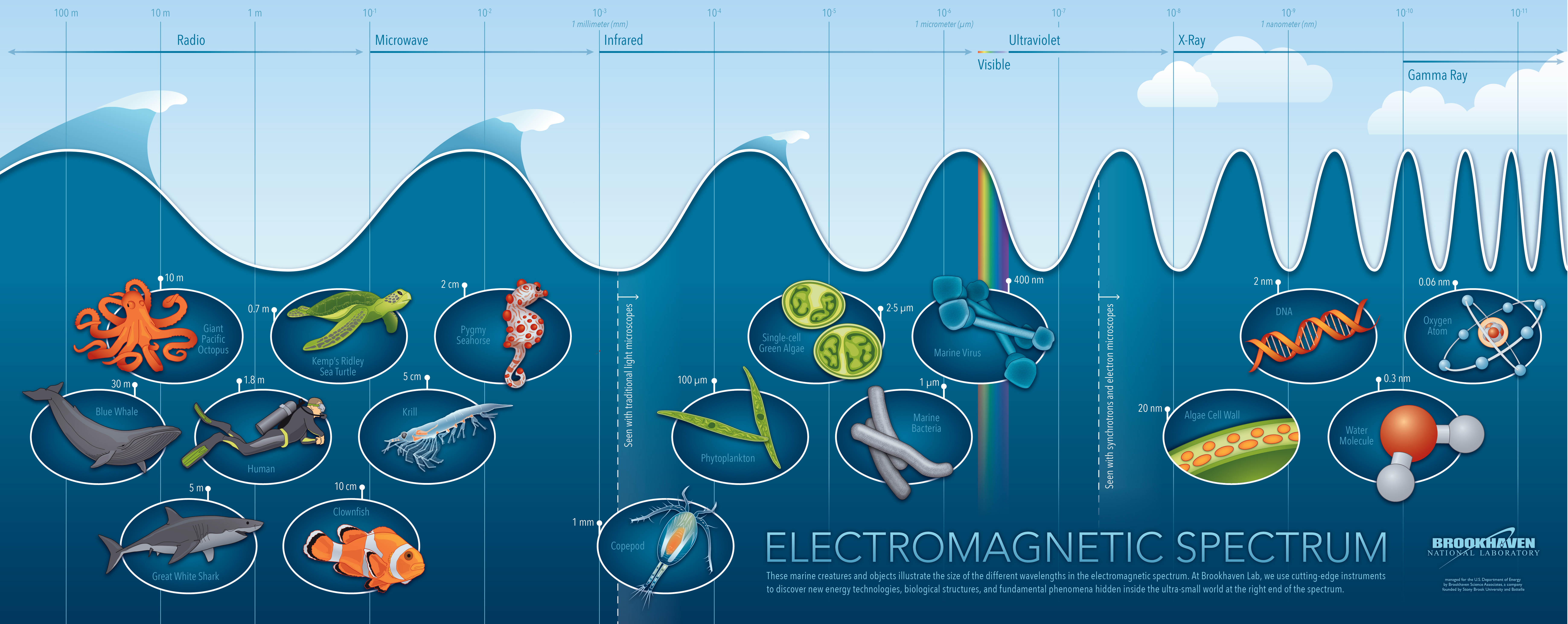 a history and use of electromagnetics At the root of this therapy lies the fact that all living organisms use electromagnetic radiation for pulsed electromagnetic field the history of pemf goes.
