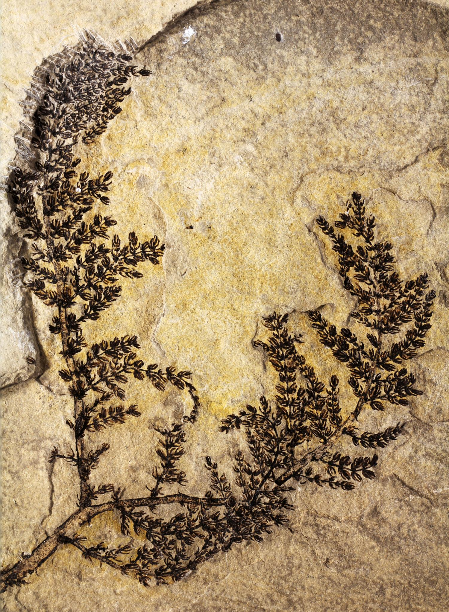 Paleobotanists Identify What Could Be The Mythical First Flower - Evolution visual effects last 130 years