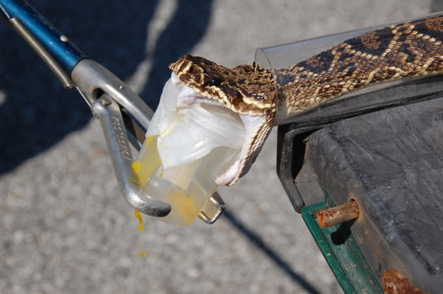 Mapping Snake Venom Variety Reveals Unexpected