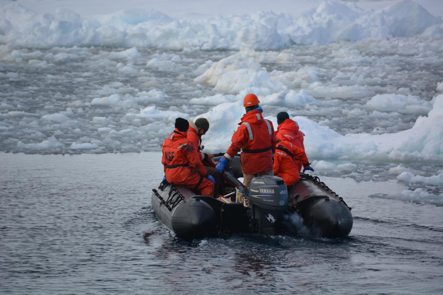 Melting glaciers feed antarctic food chain for Antarctic cuisine