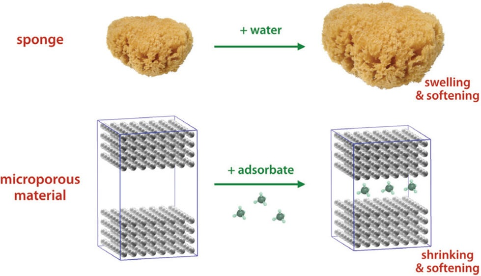 tiny sponges behave in a counterintuitive way when adsorbing water