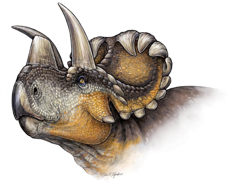 New Horned Dinosaur Reveals Evolution Of Nose Horn In