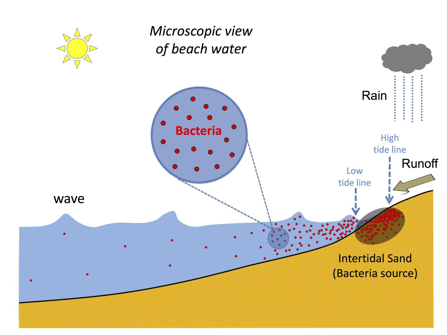 New tool better protects beachgoers from harmful bacteria levels
