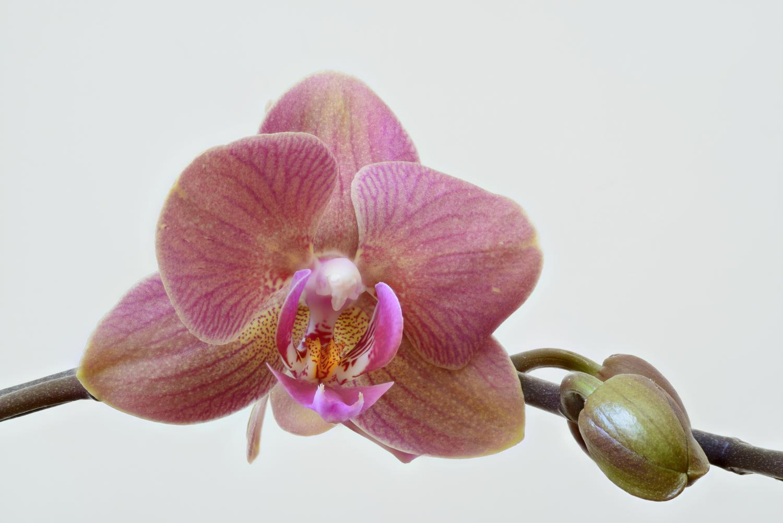 Resultado de imagen de high resolution orchid