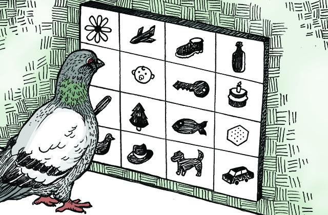 Study Suggests Similarity Between How Pigeons Learn The Equivalent