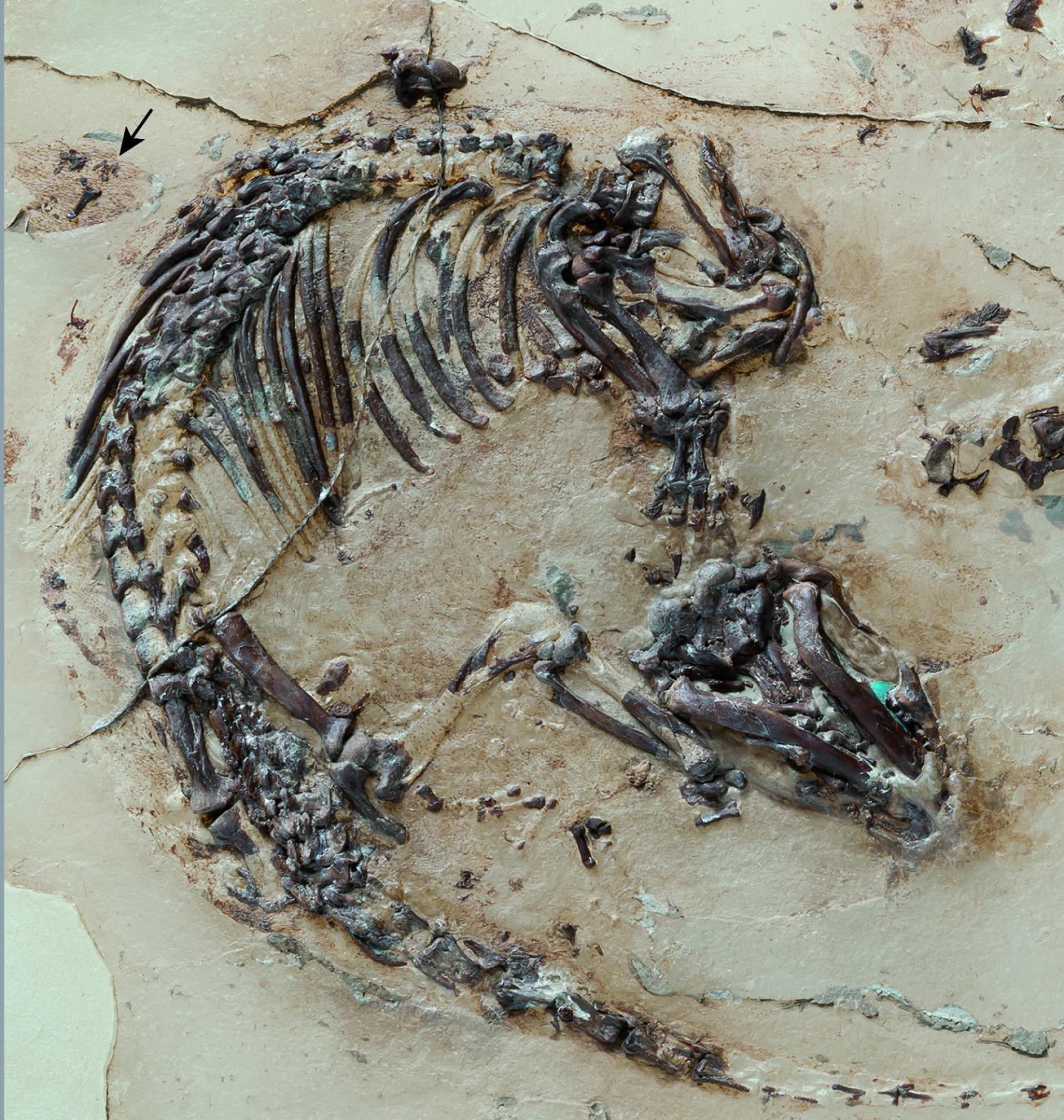 Early Mammals