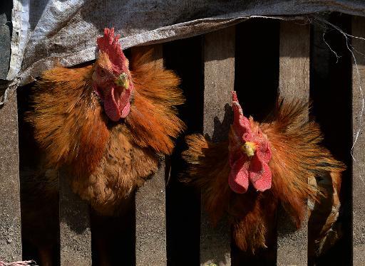 S korea orders lockdown to fight animal disease publicscrutiny Gallery