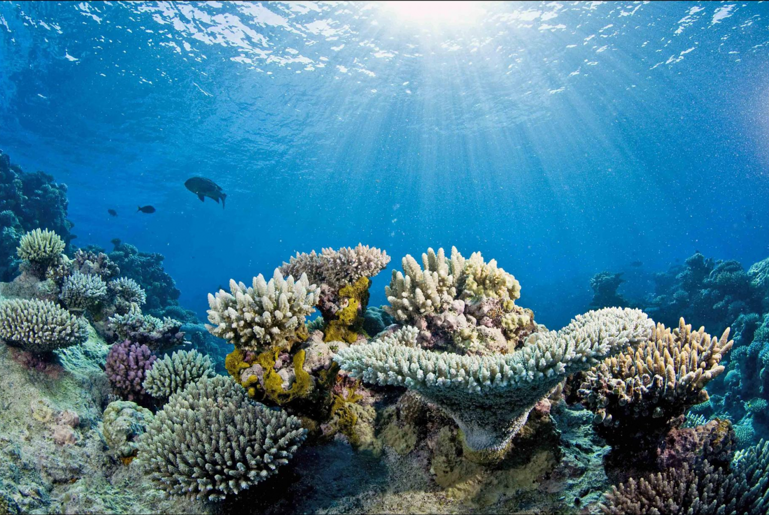 Study projects unprecedented loss of corals in Great ...